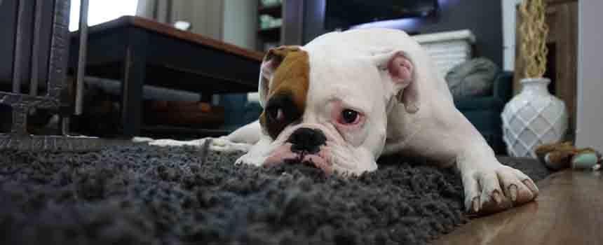 Evcil Hayvan Besleyenler İçin Temizlik Önerileri
